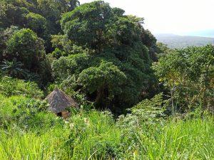 Puerto Papaya