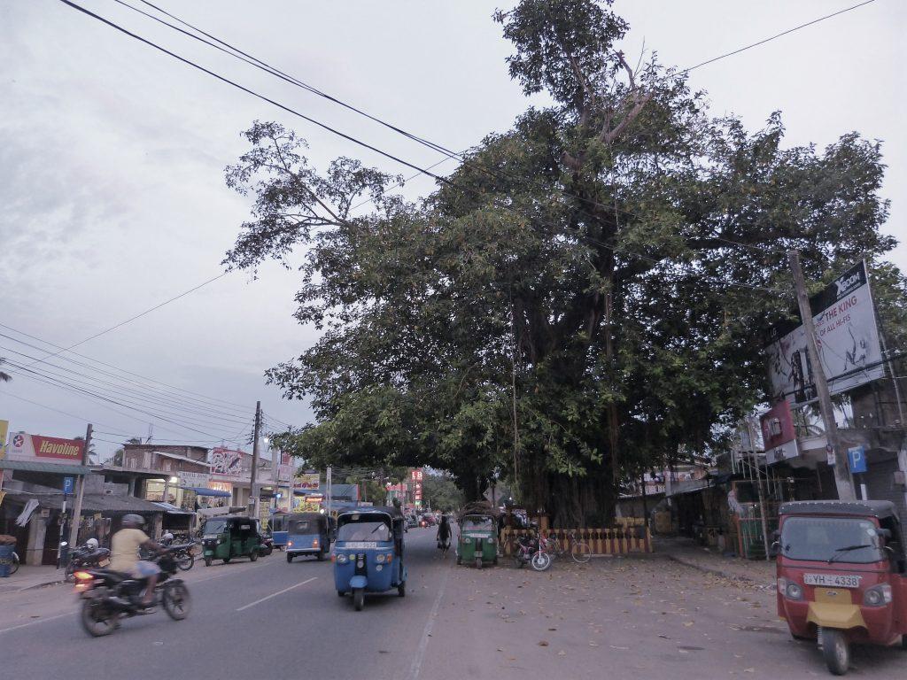 Streetscene with Tuk Tuk's in Pottuvil
